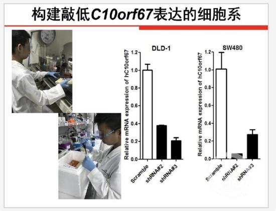 云南小学生研究基因获全国大奖引质疑